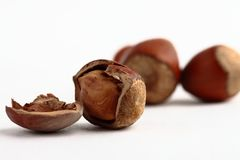 Forest nut Royalty Free Stock Image