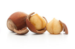 Forest nuts hazelnuts Stock Photography