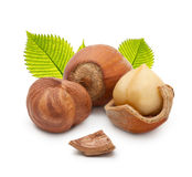 Forest nuts hazelnuts Stock Image