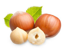 Forest nuts hazelnuts Royalty Free Stock Image