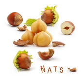 Forest nuts hazelnuts Royalty Free Stock Images