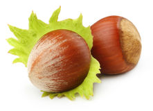 Forest nuts hazelnuts Royalty Free Stock Photo