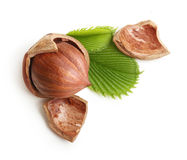 Forest nuts hazelnuts isolated Stock Photos