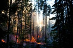 Free Forest Of Fire Royalty Free Stock Images - 66848999