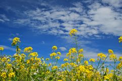 Free Forest Of Flowers Stock Photos - 676073