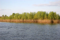 Forest on Oka riverbank in Murom, Russia Royalty Free Stock Photos