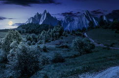 Free Forest On Grassy Hillside In Tatras At Night Stock Photo - 94646870