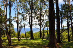Free Forest On Maui Royalty Free Stock Photography - 23370587
