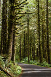 Forest in Oregon state Royalty Free Stock Image