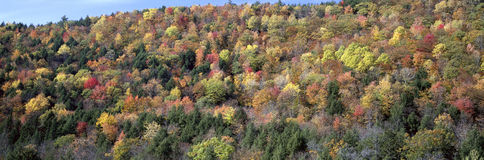 Forest in Orford, USA Stock Image
