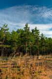 Forest outskirts at morning time Stock Images