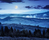Forest over foggy valley in autumn mountains at night Stock Photo