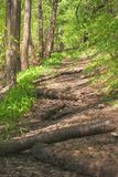 A forest overgrown trail road littered with tree trunks under the spring sunlight. A forest overgrown trail road littered with tree trunks Stock Images