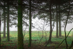 Forest overlooking clearing in the fog Royalty Free Stock Image