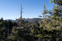 Forest Overlooking Distant Mountain Range. Colorado Rocky Mountains from Kitteredge forest Royalty Free Stock Image