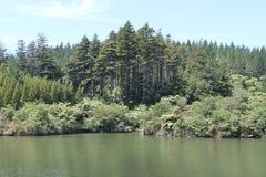 Forest Overlooking Lake photographie stock libre de droits