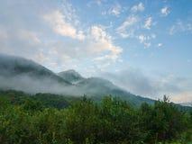 Forest Overview à feuilles persistantes dans Adygea photo stock