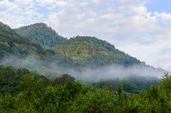 Forest Overview à feuilles persistantes dans Adygea photos libres de droits