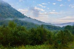 Forest Overview à feuilles persistantes dans Adygea image libre de droits