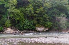 Forest Overview à feuilles persistantes dans Adygea photographie stock libre de droits