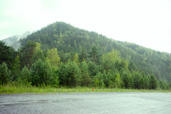 Forest Overview à feuilles persistantes Dessus des arbres verts grands avec le brouillard dense roulant plus de image stock