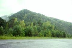 Forest Overview sempre-verde Partes superiores de árvores verdes altas com a névoa densa que rola sobre imagem de stock