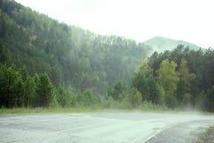 Forest Overview sempre-verde Partes superiores de árvores verdes altas com a névoa densa que rola sobre fotografia de stock royalty free