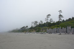 Forest on the Pacific coast on Kalaloch Campground, Washington USA Royalty Free Stock Image