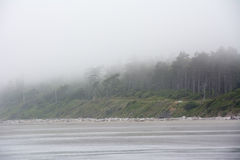 Forest on the Pacific coast on Kalaloch Campground, Washington USA Stock Photography