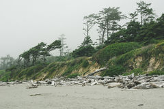 Forest on the Pacific coast on Kalaloch Campground, Washington USA Stock Photos