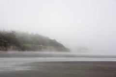 Forest on the Pacific coast, Washington Stock Photos