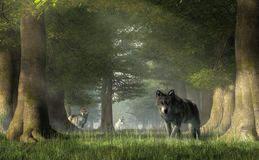 Wolves in the Forest royalty free illustration