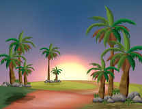 A forest with palm trees Royalty Free Stock Images