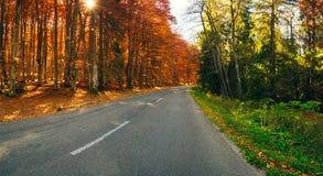 Forest_pano arancio e verde Fotografia Stock