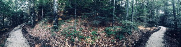 Forest Panorama photographie stock