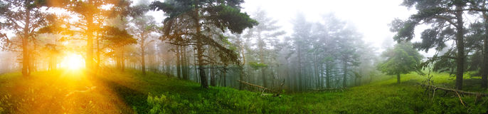 Forest Panorama Image stock