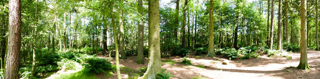 Forest Panorama Imagens de Stock Royalty Free