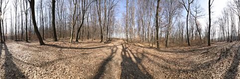 Forest panorama. 360 panoramic image from a forest. Stitched from 12 images Royalty Free Stock Images