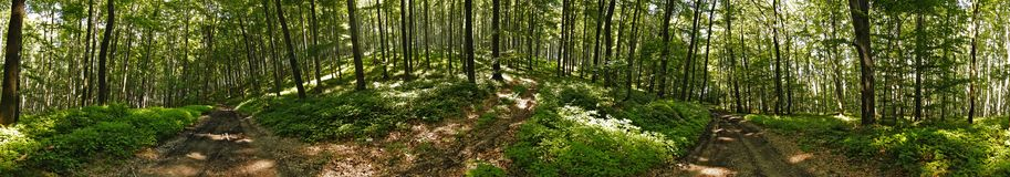 Forest panorama. 360 panoramic image from a forest. Stitched from 6 images Royalty Free Stock Photos