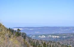 Forest Panorama Stock Afbeeldingen