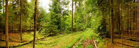 Free Forest Panorama Royalty Free Stock Image - 7261046