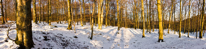 Forest Panorama Royalty Free Stock Photography