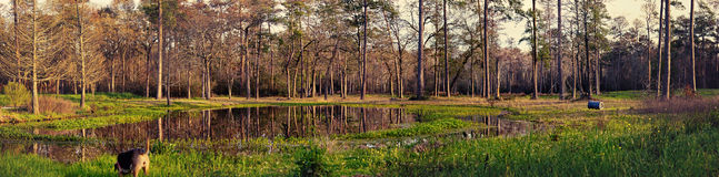 Forest Panorama Fotografia de Stock Royalty Free
