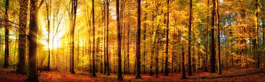 Forest panorama in autumn stock photos