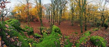 Forest panorama at autumn with green rocks.  Stock Photo