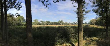 Forest panorama in Drenthe The Netherlands Royalty Free Stock Photo