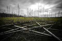 Forest panorama. With fallen trees Royalty Free Stock Image