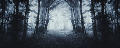 Forest panorama with mysterious fog Royalty Free Stock Images
