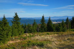 Forest, Panorama, Orlické Mountains, Czech Republic Royalty Free Stock Photo