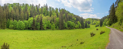 Forest panorama with path / road - Wental valley, Germany Royalty Free Stock Images
